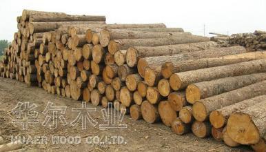 大连木材加工.jpg