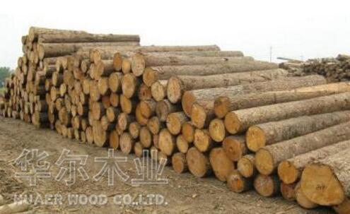 影响木材干燥的外在因素都有哪些?